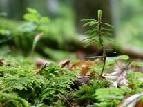 Frühling im Wald (2)