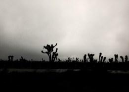 Highway Dark