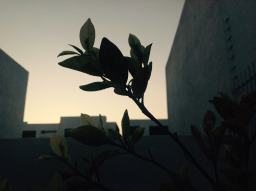 Tree Leaves Dark