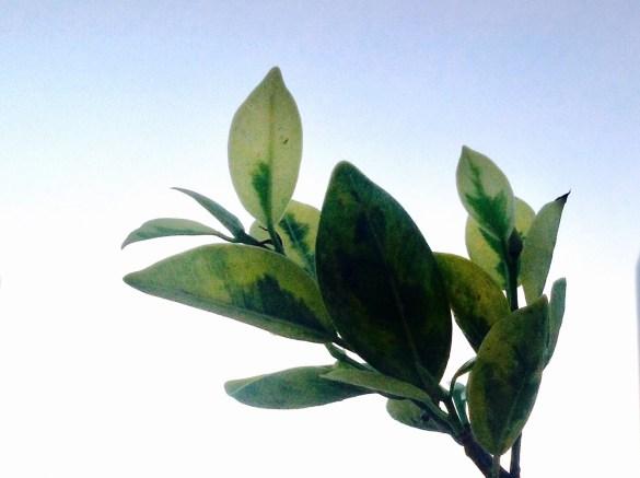 Tree Leaves Light