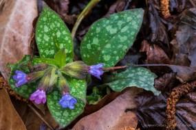 Fiore da sottobosco. Sirtori, primavera 2015 - Nikon D810, 105mm (105mm ƒ/2.8) 1sec ƒ/11 ISO 64