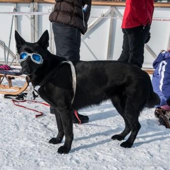 Sankt Moritz Snow Polo 2015 - Nikon D300s, 31mm (16-85mm ƒ/3.5-5.6) 1/30sec ƒ/5 ISO 200
