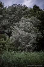 Lago di Pistono, 14.06.2015 - Nikon D810, 24mm (85.0mm ƒ/1.4) 1/640sec, ƒ/1.4 ISO 1600