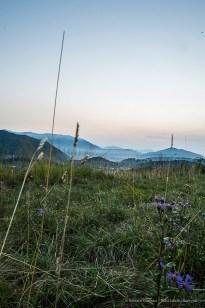 """H:07:17:42. The last cornflowers of the season. Nikon D810, 24mm (24.0mm ƒ/1.4) 8"""" ƒ/16 ISO 64"""