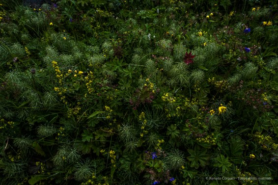 The watery haze produced by the fall is a panacea for plants and flowers alike. Nikon D810, 24 mm (24.0 mm ƒ/1.4) 1/125 sec ƒ/4 ISO 64