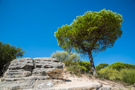 """A nice little walk above the cliffs in the park at Barbate. Nikon D810 24 mm (24-120 mm ƒ/4) 1/160"""" ƒ/8 ISO 64"""