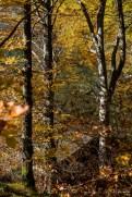 Alpsee bei Schwangau, autumn 2014 - Nikon D810, 80mm (80-400 ƒ/4.5-5.6) 1/100 ƒ/8 ISO 64
