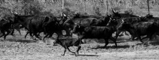 Mas de la Pinede, Saintes Maries de la Mer. 27 settembre 2014 - Nikon D810, 120mm (80-400 ƒ/4.5-5.6) 1/1250sec ƒ/10 ISO 1000