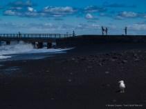 Phylosopher seagull. Stromboli, 2 settembre 2014 - Canon PawerShot G1 X, 60mm, 1/800 ƒ/5.8 ISO 100