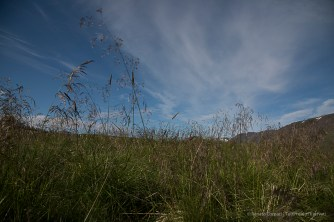 Moss makes a very fertile substrate. Nikon D810, 24 mm (24-120.0 mm ƒ/4) 1/640 sec ƒ/6.3 ISO 64