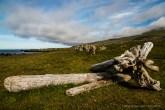 Natural art piece near Illugastaðir. Nikon D810, 24 mm (24-120.0 mm ƒ/4) 1/160 sec ƒ/6.3 ISO 64