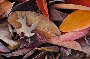 nature-patterns-003