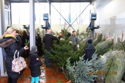 121215_weihnachtsbaumverkauf-witzel_09