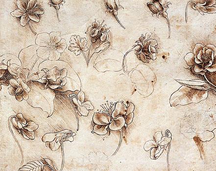 Leonardo Da Vinci - Mesa Botánico