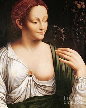 Leonardo da Vinci - Columbine