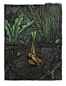 Germination Art | Fine Art America