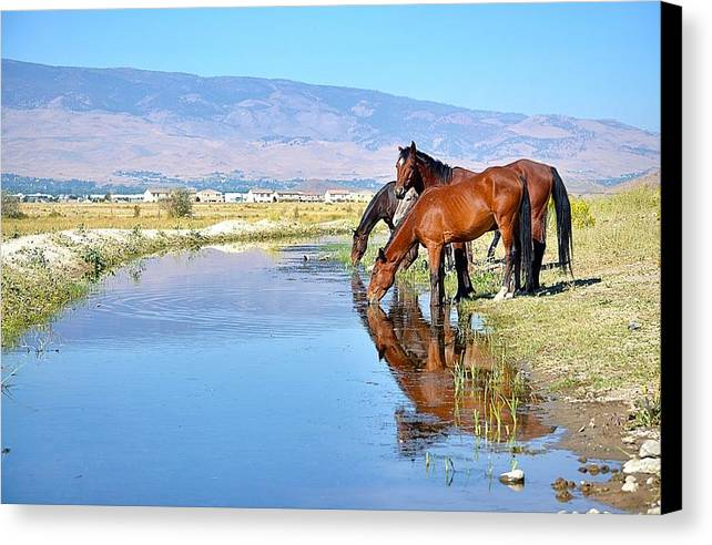 Mustangs At The Waterhole Canvas Print featuring the photograph Mustangs At The Waterhole by Maria Jansson