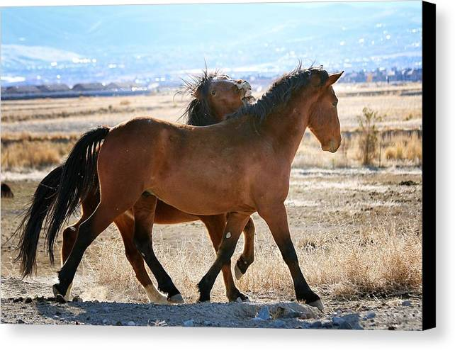Mustang Canvas Print featuring the photograph I Got Your Back by Maria Jansson