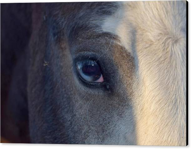 Equine Macro Photography Canvas Print featuring the photograph Miss Beautiful by Maria Jansson