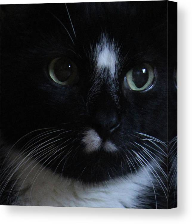 Cat Canvas Print featuring the photograph Those Eyes by Holly Morris