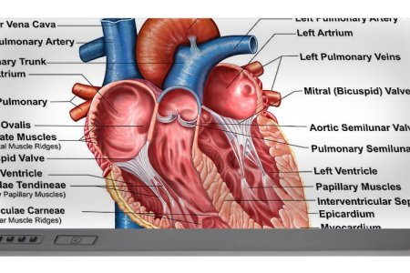 Interior human anatomy 4k pictures 4k pictures full hq wallpaper interior parts human body neck parts interior human body neck parts interior parts interior of the pharynx human anatomy encyclopedia brita flickr ccuart Images