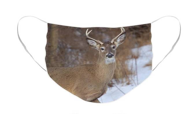 Deer Face Mask featuring the photograph Deer in Winter by Nancy Ayanna Wyatt