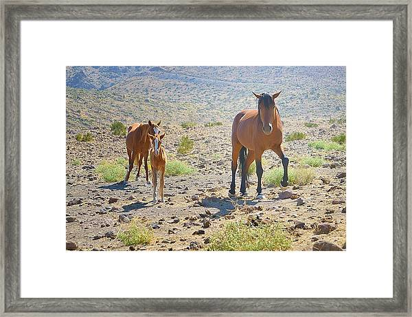 Family Portrait Framed Print featuring the photograph Family Portrait by Maria Jansson