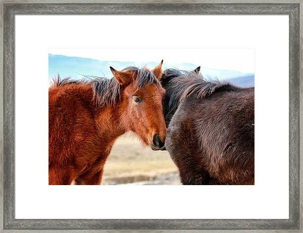Foals Framed Print featuring the photograph My Best Friend 2 by Maria Jansson