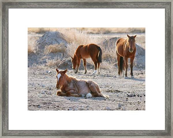 Mustang Framed Print featuring the photograph Wild Horses by Maria Jansson