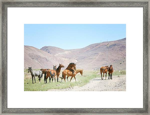 Young Horses Playing Framed Print featuring the photograph Young Mustangs Playing 4 by Maria Jansson