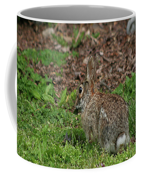 Season Coffee Mug featuring the photograph Cottontail by Holly Morris