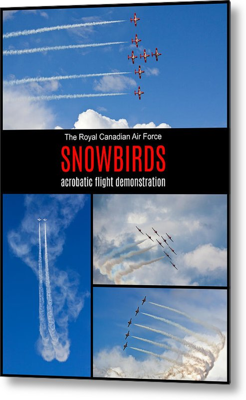Snowbirds Metal Print featuring the photograph Snowbirds Collage 2 by Tatiana Travelways