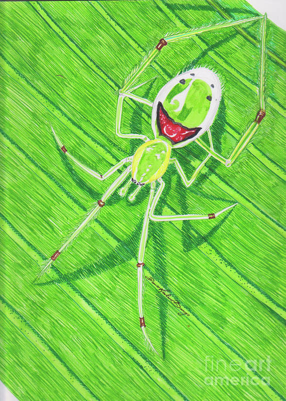 happy face spider  # 46