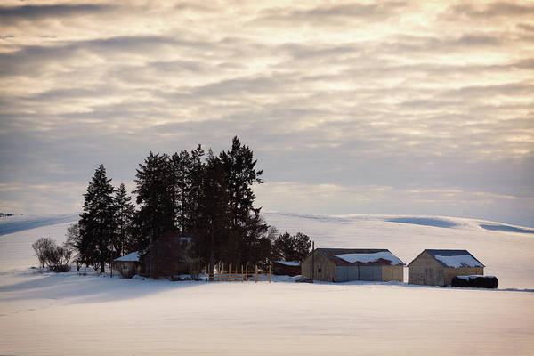 Winter Art Print featuring the photograph Winter Farm At Golden Hour by Tatiana Travelways