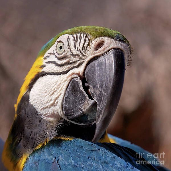 Close-up Art Print featuring the photograph Parrot Portrait by Tatiana Travelways