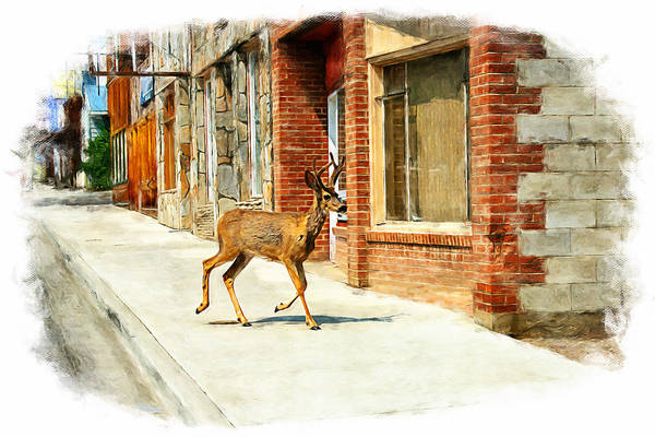 Deer running on the main street of Challis Idaho