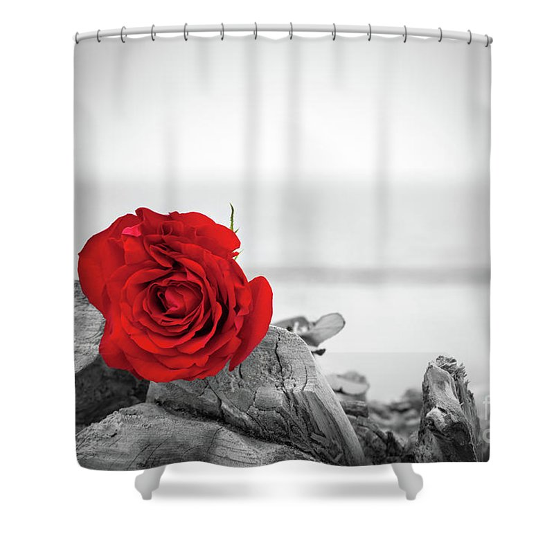 red rose on the beach color against black and white love romance melancholy concepts shower curtain