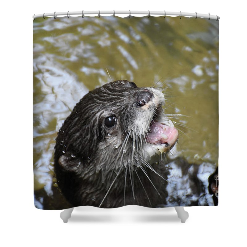 adorable river otter with his mouth open shower curtain