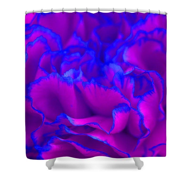 bold fuschia pink and blue carnation flower shower curtain