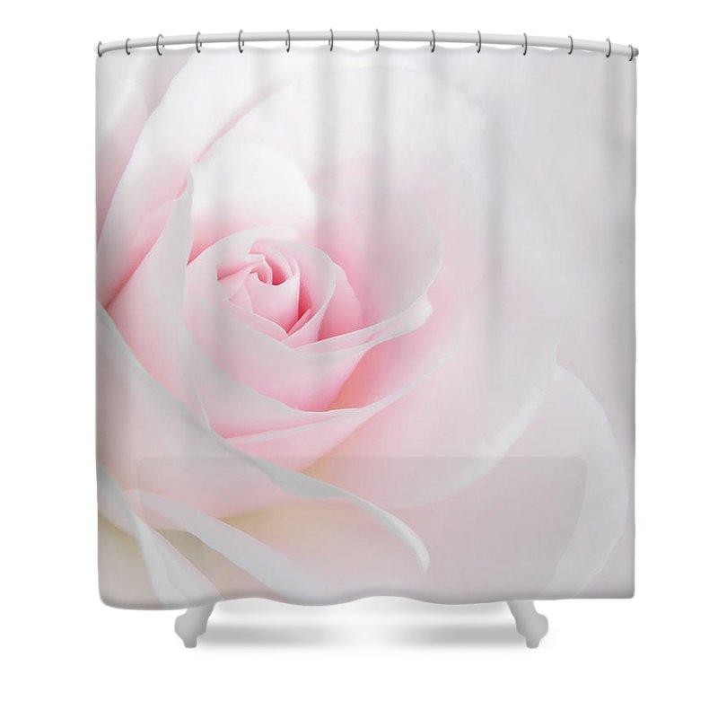 heaven s light pink rose flower shower curtain