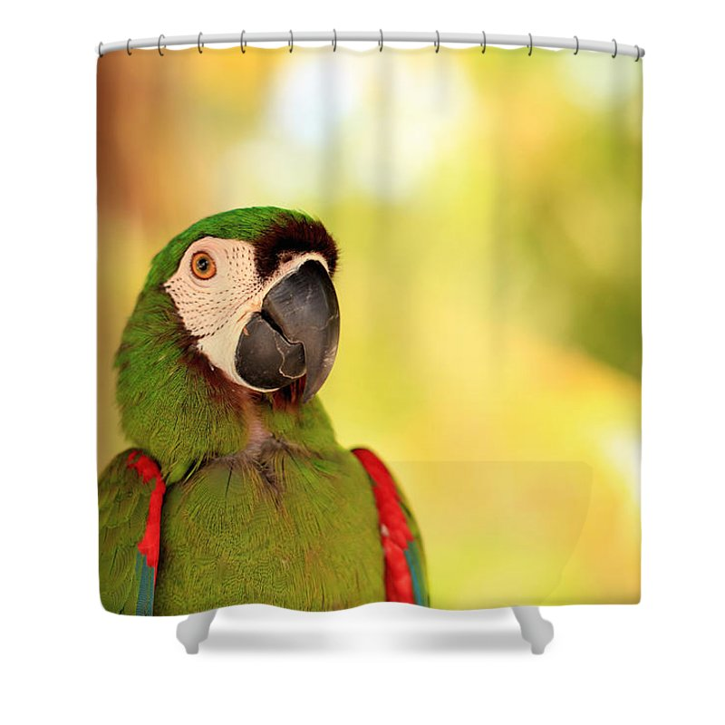 close up of tropical parrots face shower curtain