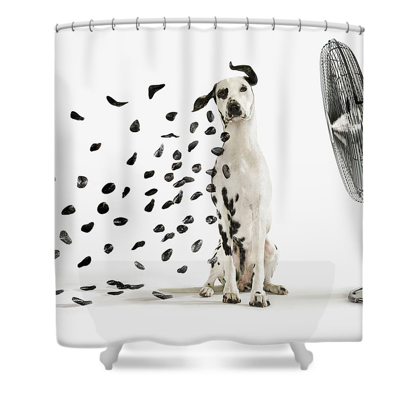 spots flying off dalmation dog shower curtain