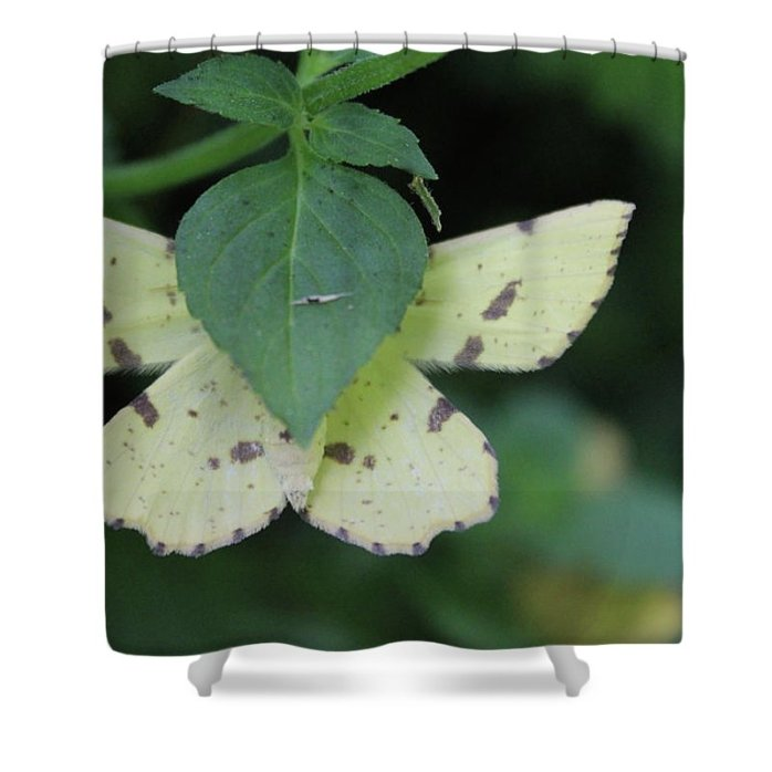 Hiding Shower Curtain featuring the photograph Hiding by Holly Morris