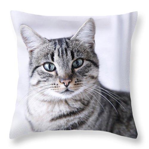 portrait gray tabby cat throw pillow