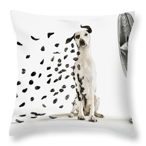 spots flying off dalmation dog throw pillow