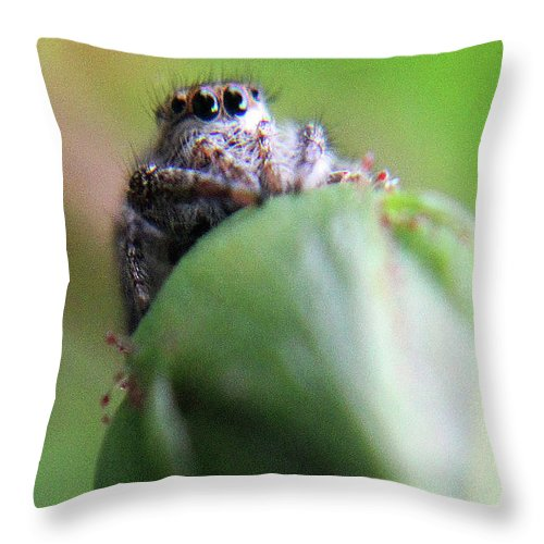 Nature Throw Pillow featuring the photograph A Spider And A Rose by Holly Morris