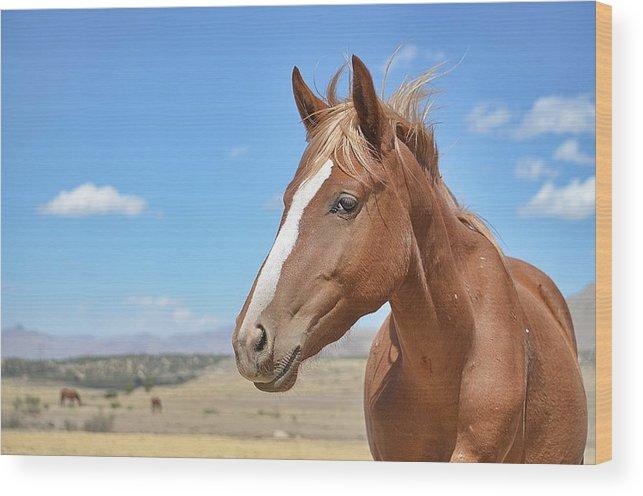 Virginia Range Mustangs Wood Print featuring the photograph Virginia Range Mustangs by Maria Jansson