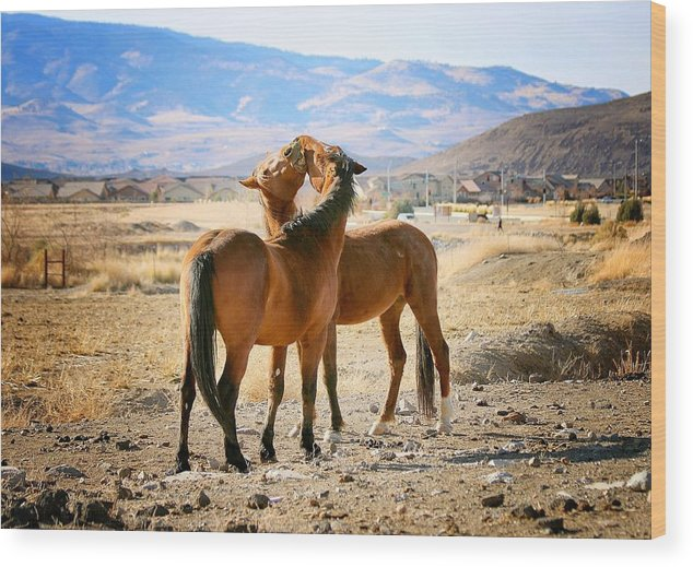 Equine Photography Wood Print featuring the photograph Happiness by Maria Jansson