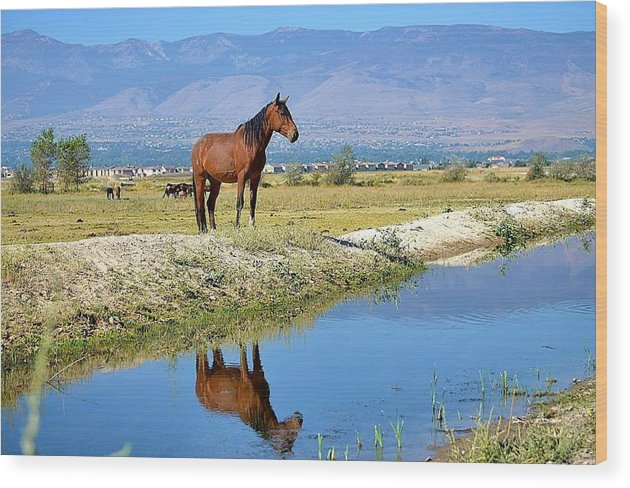 Mustang Wood Print featuring the photograph A Mustang In The Mirror by Maria Jansson