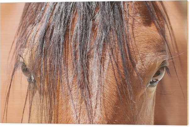 Mustang Macro Wood Print featuring the photograph Mustang Macro by Maria Jansson